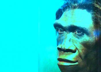 Homo erectus. /Sumber ilustrasi: Google Images