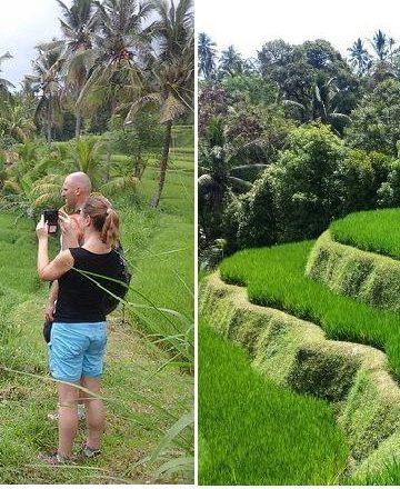 Lekuk liku persawahan di Desa Mayong Seririt Buleleng