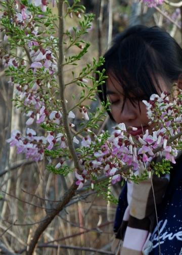 Penulis di antara bunga gamal (Foto: dok penulis)