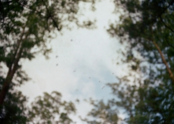 Ia Menyepi Seperti Pohon Tua  -- Cerpen/Foto Wayan Martino
