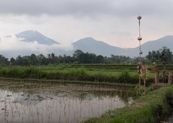 Pemandangan di Subak Ganggangan, Penebel, Tabanan, Bali