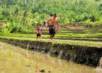 Pemandangan alam di Desa Pedawa, Kecamatan Banjar, Buleleng, Bali. [Foto oleh Made Swisen]