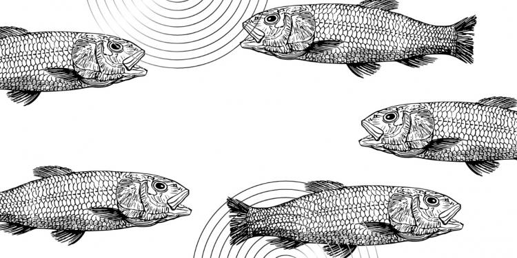 Kisah-Kisah Ganjil dari Negeri Cina; Ikan Yang Bisa Bicara